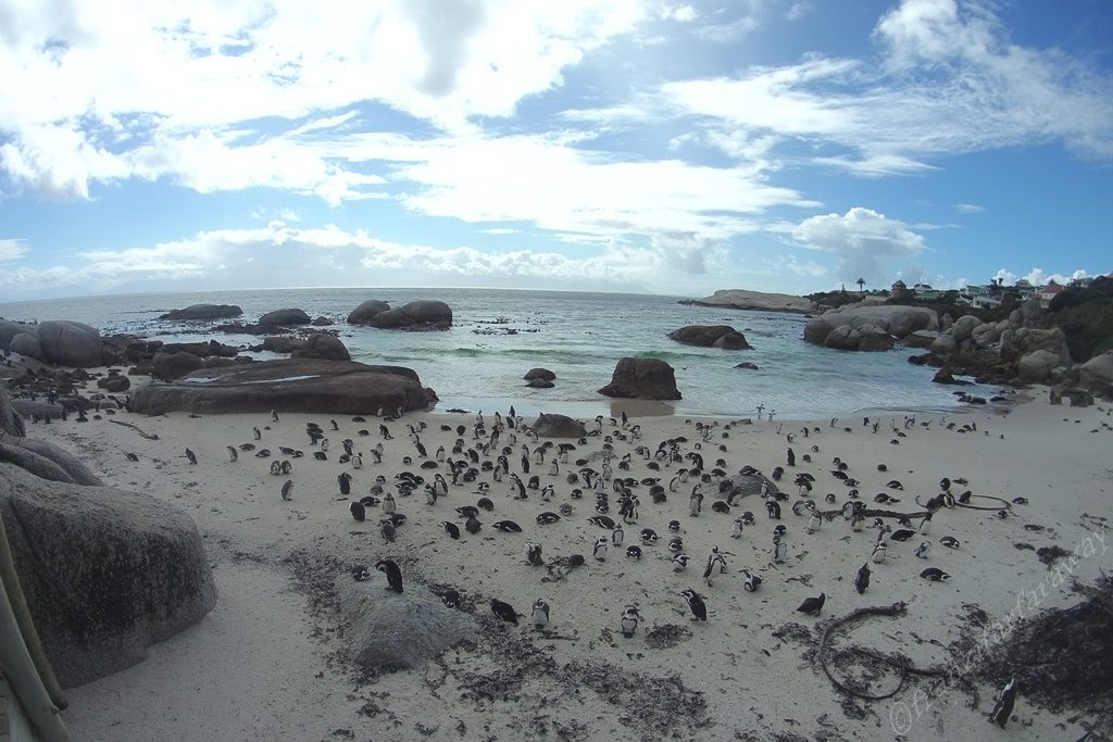 Whales and Penguins