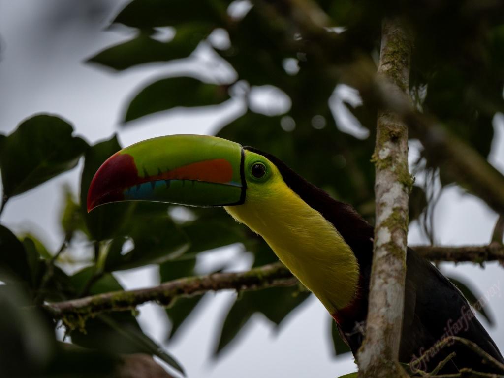 Wildlife in Boca Tapada